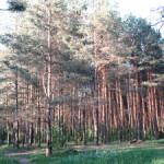 В Сенненском районе установлен запрет на посещение лесов