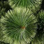 Экологи: Искусственная елка лучше натуральной