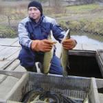 Волынскую рыбу на рынки Луцка не пускают?