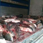 В Киверцах изъяли полтонны рыбы неизвестного происхождения